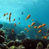 12854092 - indonesian aquarium