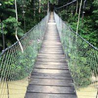 tangkahan jungle brug