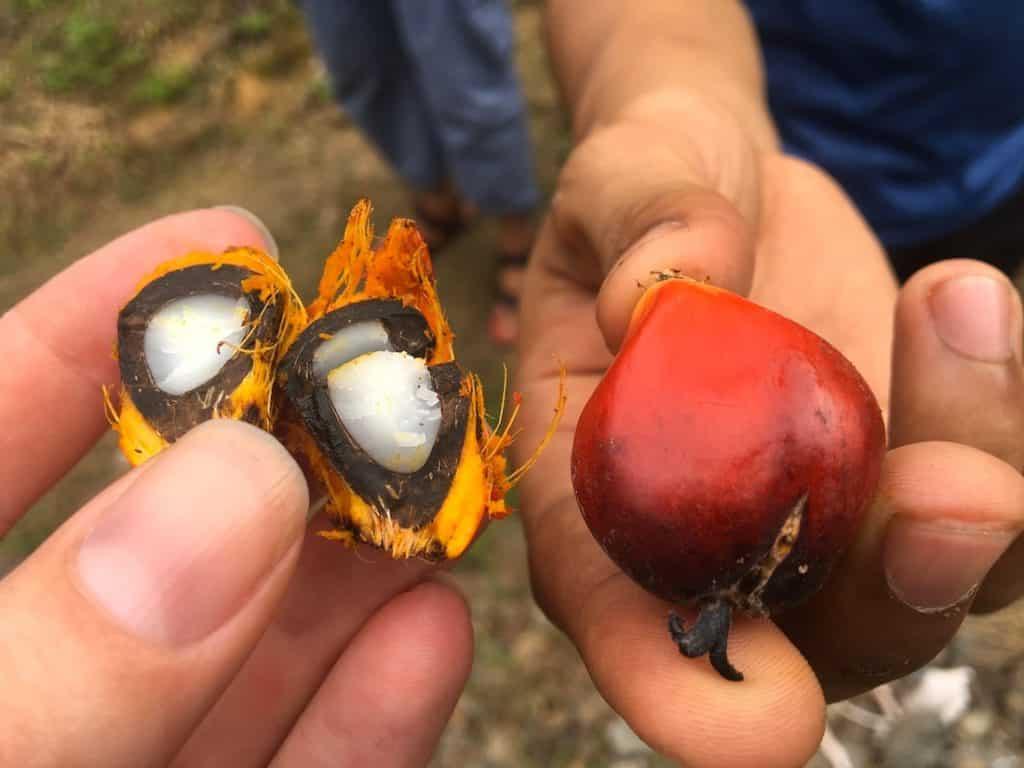 palmolie vrucht