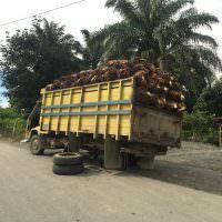Palmolie producten