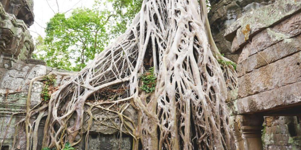 Reis Cambodja