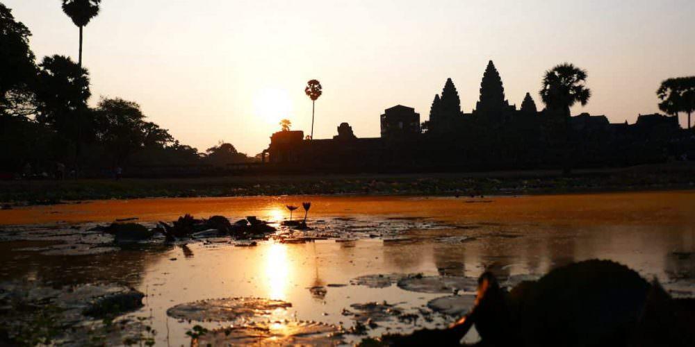 Reis Cambodja 7