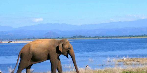 Sri Lanka_home