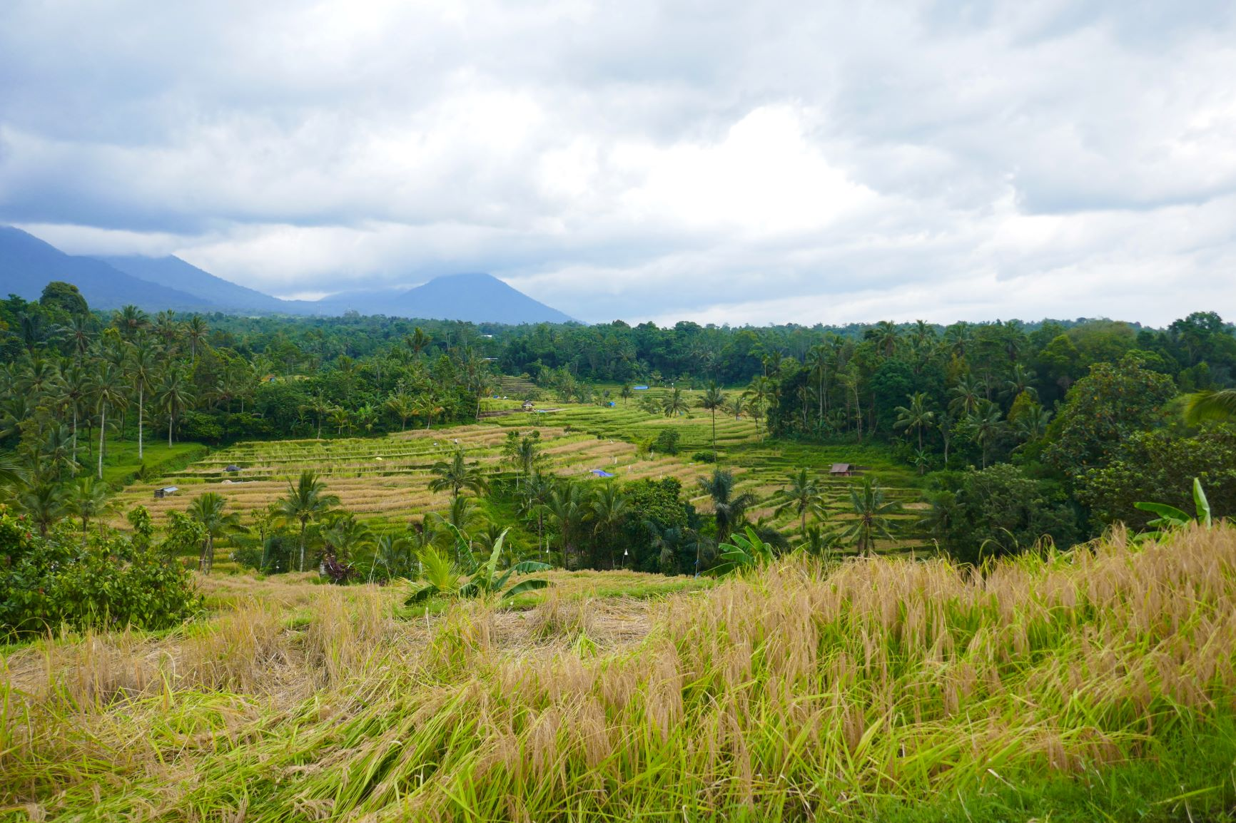 Jatiluwih rijstveld