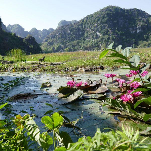 Ninh_Binh124